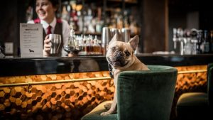 Read more about the article Best dog friendly restaurants in Cornwall to celebrate Father's Day